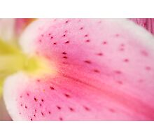 ~lily~ Photographic Print