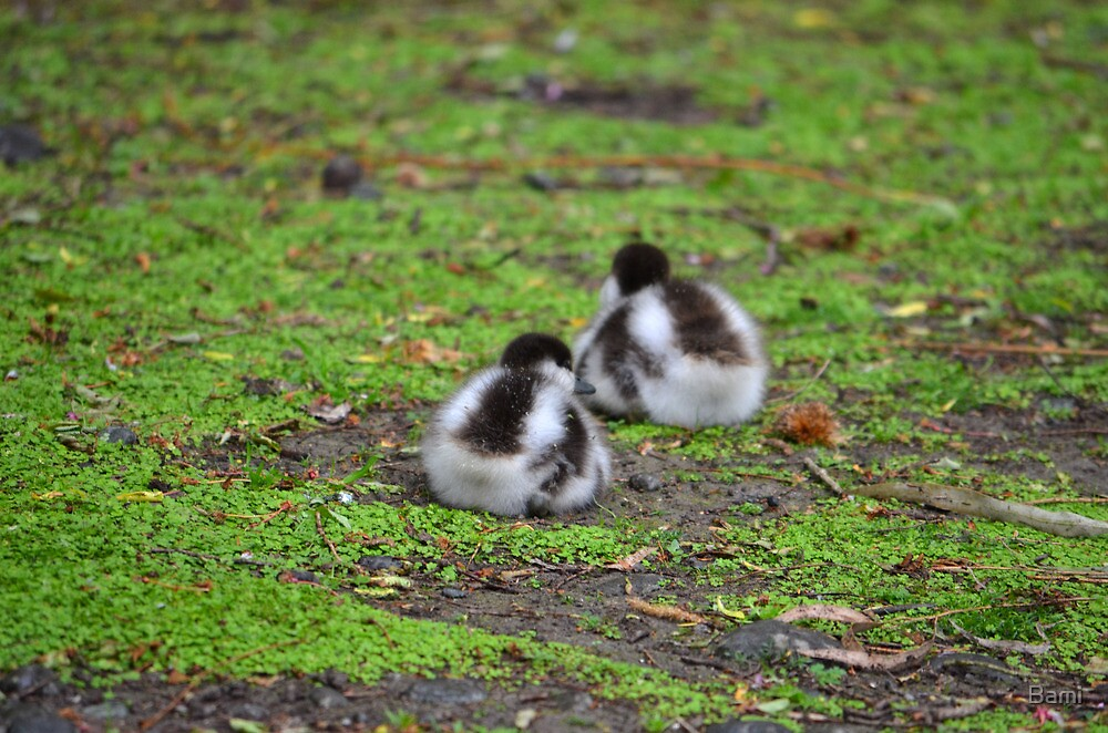 2 Fluffly Ducklings by Bami