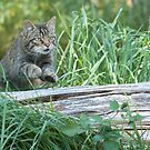 The cat jumps over the log by Anthony Brewer