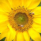 Two Busy Bees by Heather A McGhee