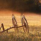 Dawn in the Field  by TerrillWelch