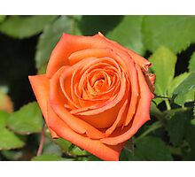 A Rose for Peach Photographic Print