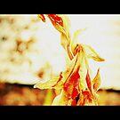 golden by samos