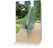 Peacock Glory Greeting Card