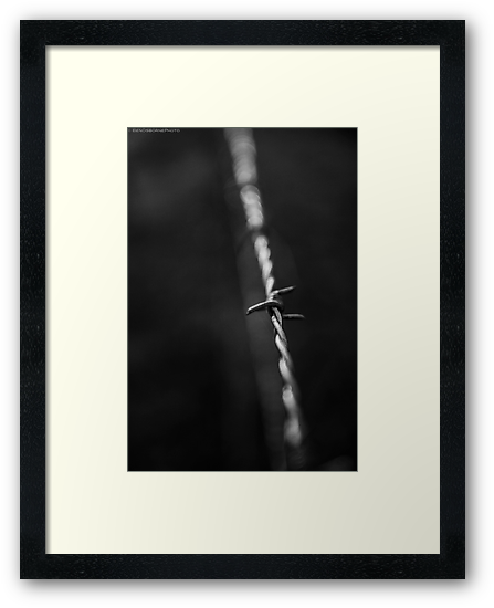 Barbed wire by Ben Osborne