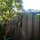 Sunlight Shining through a Spider Web by MardiGCalero