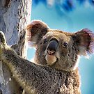 How much can a Koala Bear? by Kym Howard