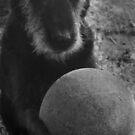 Wanna play? by Matt Mawson