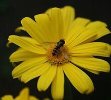 Busy Bumble Bee by shirlea62