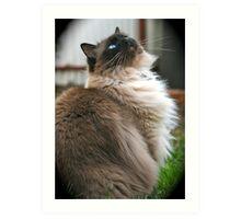Harry, The Ragdoll Cat of my life Art Print
