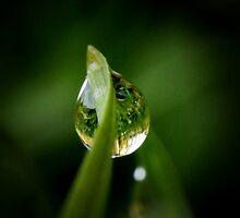 Morning dew by lumiwa