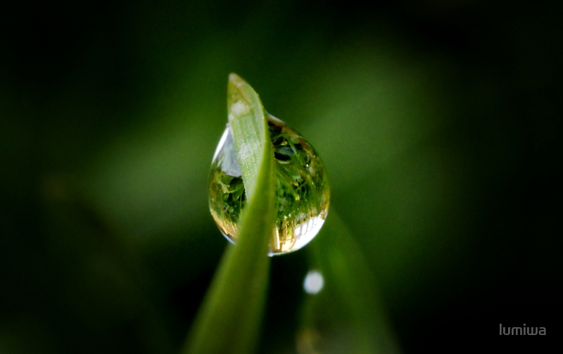 Morning dew by lumiwa