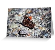 NZ Spotted Butterfly Greeting Card