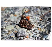 NZ Spotted Butterfly Poster