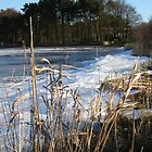 Ice and Reeds - Loch Leven, Scotland by MiRoImage