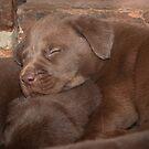 Dog Tired by Darren Allen