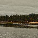 Woodland Lake by photecstasy