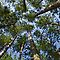 Looking Up: Canopy View