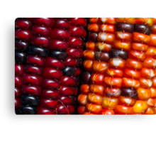 Ears of Indian Maize Canvas Print