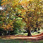 Autumn tree by bobbykim666