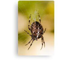 Araneus Diadematus - Garden Spider Canvas Print