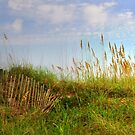 What Lurks Beyond The Dunes by Kathy Baccari