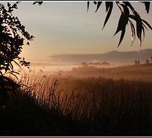 Misty Morning by photogliveco