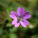 Weeds... by fourthangel