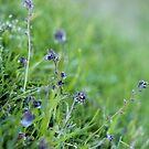 Weeds 2... by fourthangel