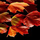 COLORS OF FALL by RoseMarie747
