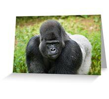 Western Lowland Gorilla, Silverback Greeting Card
