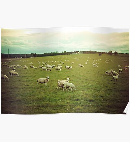Wool Poster