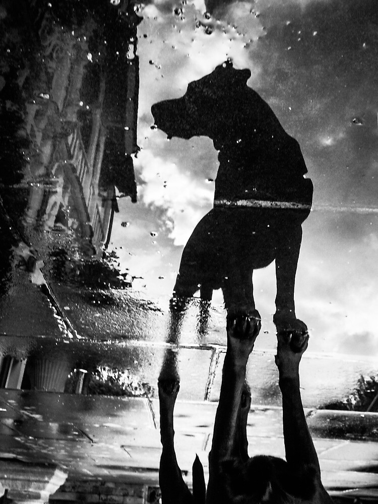 My #dog filby reflected in a puddle today taken on my #galaxynexus by Heather Buckley