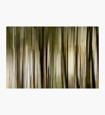 forest abstract Photographic Print