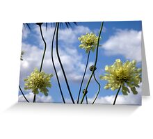 Scabious in the sky Greeting Card