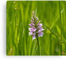 Common Spotted Orchid Canvas Print