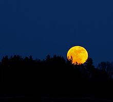 Super Moon Rising by Sue Robinson