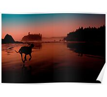 Ruby Beach Dog 2 Poster