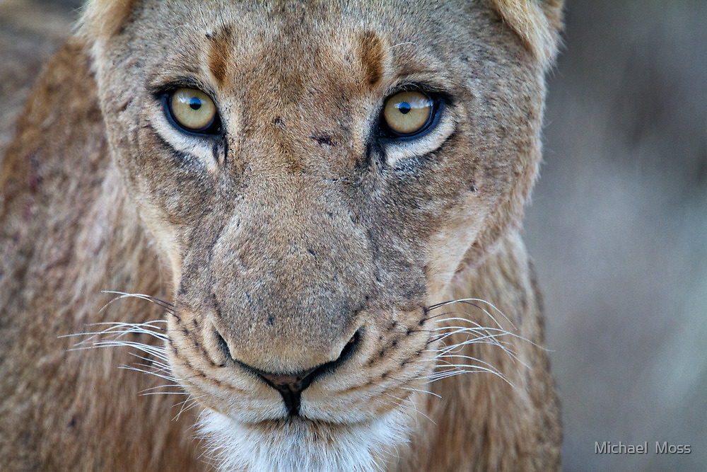 Looking Into Your Soul by Michael  Moss
