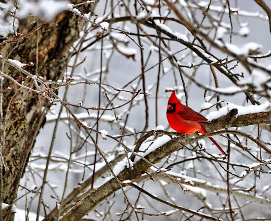Big red by Penny Rinker