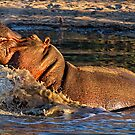 VERY Unhappy Hippo by Michael  Moss