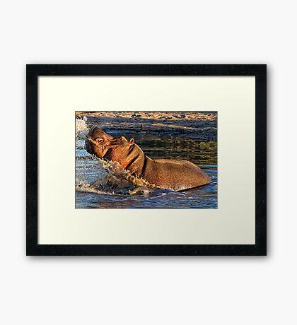 VERY Unhappy Hippo Framed Print