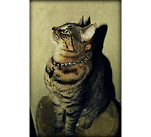 Halloween Collar Photographic Print