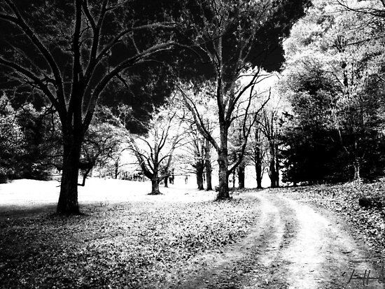 Maudslay Spirit Path   by DrewK