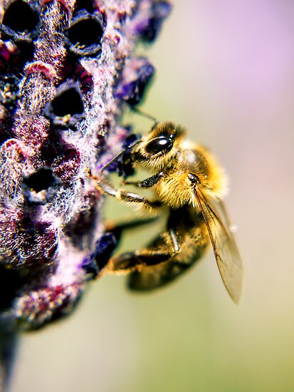spring bumble bee by evvy84