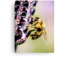 spring bumble bee Canvas Print