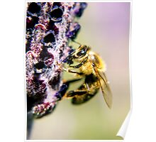 spring bumble bee Poster