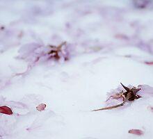 Spring snow by Deb Smith