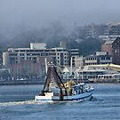 Snow White Returns - Newcastle Harbour NSW Australia by Phil Woodman
