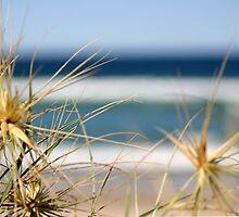 Beach Grasses by Jen  Hutchison